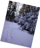 Winter hiking Trails at Roma At Three Rivers PEI